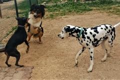 dressage canin la ciotat