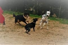 dresseur canin la ciotat