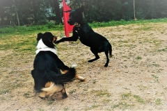 education canine la ciotat