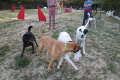 education canine la ciotat